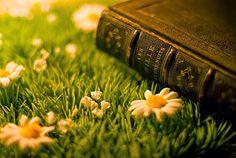 O Anãozinho de Jardim: Dos livros que viram filmes