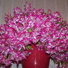Necesitas solo una cucharadita de este ingrediente  para que tus plantas de interior florezcan como locas! #florecer #plantas