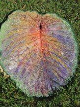 cement leaf