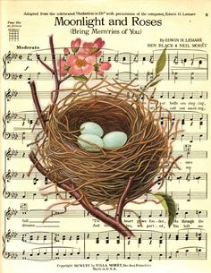 bird nest and music