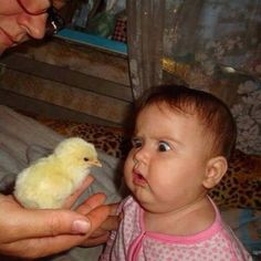We Love Kids And Everything About Them Pics). Funny photos of kids just being kids. Photos of kids that will make your day. Funny Cute, Funny Kids, Cute Kids, Cute Babies, Hilarious, Super Funny, Precious Children, Beautiful Children, Beautiful Babies