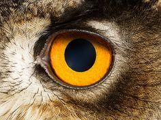 Animal Eyes on Photography Served