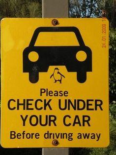 車の下のペンギン注意