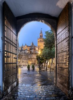 Giralda de Sevilla desde los Reales alcazares / Giralda de Sevilla View from the Reales Alcazares (Andalusia, Spain by dleiva, via Flickr