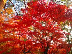 2012/11/19 京都 紅葉