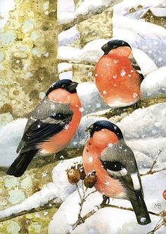 Marjolein Bastin birds art watercolor