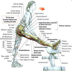 Hamstrings-Exercise-2.jpg (1027×1027)
