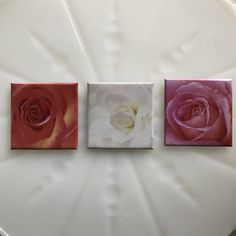 Remember to stop and smell the #roses every day with this #magnet set! #refrigeratormagnets #giftideas #Set of 3 Photographic Square Refrigerator Magnets Roses Hostess Gift Christmas Birthday Floral Original Photography by EveryBeautifulDay on Etsy