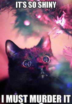 Every cat during Christmas…