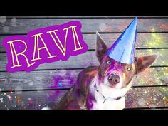 RAVI border collie growing up Border Collie, Growing Up, Youtube, Instagram, Grow Taller, Youtubers, Youtube Movies, Border Collies