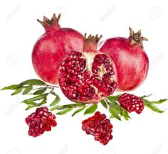 19649156-Pomegranate-isolated-on-the-white-background-Stock-Photo-pomegranate.jpg (1300×1200)