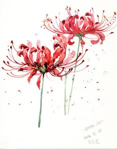 Watercolor Flowers, Watercolor Paintings, Red Spider Lily, Lilies Drawing, Aquarell Tattoo, Anime Tattoos, Chinese Art, Asian Art, Japanese Art