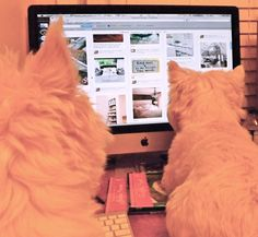 Thankfully, I now see that it not just my Westie that watches TV, YouTube, online games... Ooooh... They are so intelligent :-)