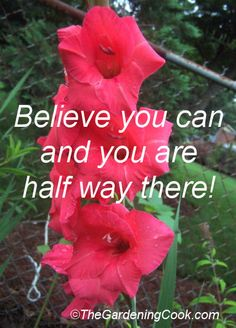 Gladioli from my test garden - see more motivational quotes   http://thegardeningcook.com/inspirational-happiness-sayings/