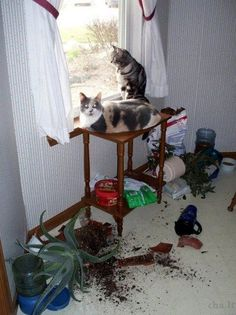 """""""Ben quoi ? Y'a pas idée de mettre des plantes devant la fenêtre aussi !"""""""