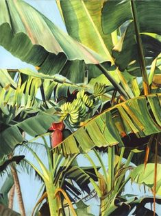 watercolor paintings of banana plants - Yahoo Search Results Watercolor Trees, Watercolor Landscape, Landscape Paintings, Watercolor Paintings, Gouache Painting, Watercolour, Forest Mural, Banana Art, Jungle Art