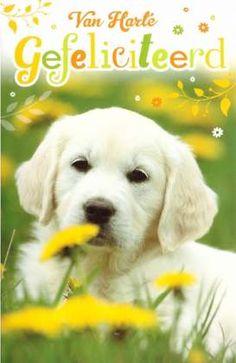 Van harte gefeliciteerd! #Dierenkaart  #felicitatiekaart hond