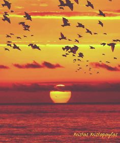 A magical sunset 🌇 on the beach 🌊 with flying birds 🐦 🐦 🐦 👌 ☺ 💖