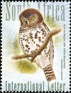 Stamps showing African Barred Owlet Glaucidium capense, with distribution map showing range South African Birds, Stamp World, Postage Stamp Collection, World Birds, Vintage Stamps, Bird Drawings, Owl Art, Stamp Collecting, Lettering