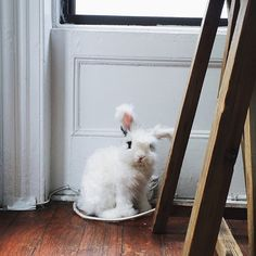 On Cranberry Street, An Apartment Fit For a Foodie and Her Bunny | Design*Sponge