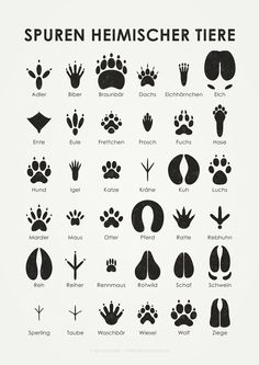 "Animal tracks, infographic from the ""Lily Lux Notebook"", illustration © 2011 Iris L .- Animal tracks, infographic from the ""Lily Lux Notebook"", illustration © 2011 Iris Luckhaus Iris, Outdoor Survival, Survival Tips, Survival Skills, Animal Tracks, House Illustration, Illustrations Poster, Family Illustration, Information Graphics"