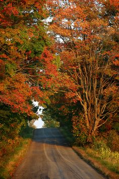 Upstate New York. I miss it during this time of year. Leaves changing, a nip in the air, trail riding in the woods... :(