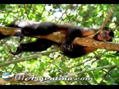 Iguazu Falls Jungle tours