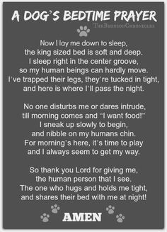 Dogs bed time prayer This is so true in my house..
