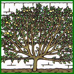 Obstbaum im Garten anbauen Ficus, Plants, Clay Soil, Fig Tree, Begonia, Fig, Planters, Figs, Plant