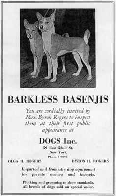 Advertising the Basenji's first public appearence