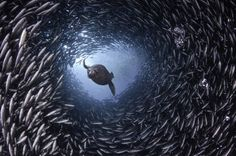 Galapagos diving shot wow! #allyouneedis #ecuador
