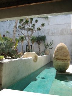 Swimming pool and cactus garden design inspiration