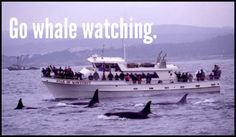 Never been on a whale watching tour, but I have seen whales!