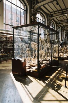 Bones in cabinets