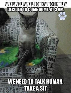 Funny Cat Pics with Captions - 60 the fanniest and the most hilarious pictures! Look other funny and hilarious gifs, videos & pictures of cute cats on site! Funny Animal Memes, Cute Funny Animals, Funny Cute, Cute Cats, Funny Memes, Funniest Memes, Hilarious, Animal Captions, Funny Kitties