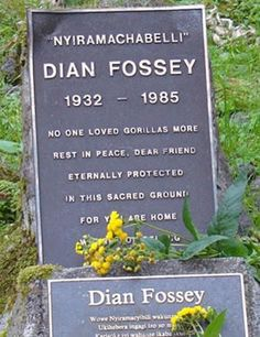 "Fossey was discovered murdered in the bedroom of her cabin in Virunga Mountains, Rwanda on December 24, 1985. The last entry in her diary read :     ""When you realize the value of all life, you dwell less on what is past and concentrate more on the preservation of the future"""