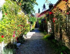 Visby, Suecia - Fiskargränd (calle de los pescados), por los pescadores colindantes, es una de las más fotografiadas en Suecia. Rosas trepad...