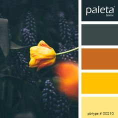 PALETA #00201 - #00250 Paint Color Palettes, Colour Pallette, Color Palate, Colour Schemes, Color Combos, Pantone, Colour Board, World Of Color, Color Stories