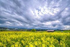 'hello springtime copy' by kittybern Spring Time, Switzerland, Mountains, Nature, Travel, Viajes, Naturaleza, Destinations, Traveling