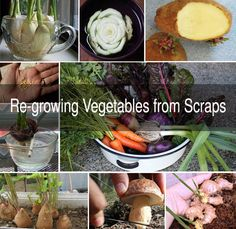 #Foods That'll Re-Grow from #Kitchen #Scraps  Looking for a healthy way to get more from your garden? Like to know your food is free of the pesticides and other nasties that are often sprayed on commercial crops? Re-growing food from your kitchen scraps is a good way to do it!