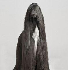 animais-peludos-5