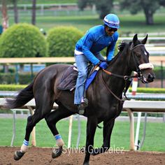 Cozmic One at Belmont's track (Photo by Sylvia Gonzalez)