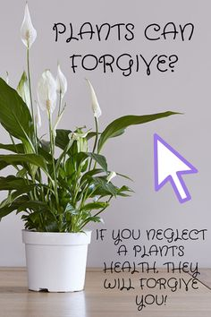 The Forgiving Peace Lily Plant Health, Peace Lily, Leaf Coloring, Plant Care, How To Stay Healthy, Forgiveness, House Plants, How To Look Better, Blog