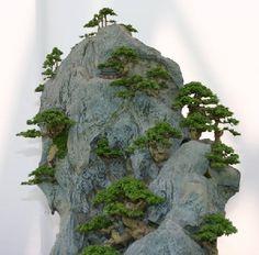 Formación bonsai sobre roca
