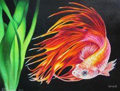 Betta Fish: Art, Design & Photography   Redbubble