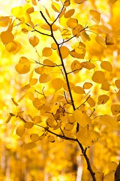 Leaves turning yellow for fall. Inspiration for #yellow #gems