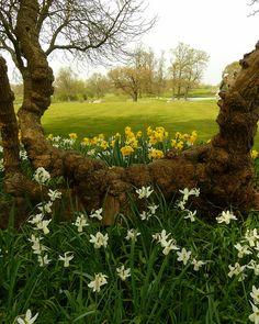 Spring, Charlecote Park, Warwickshire
