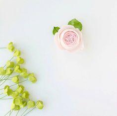 Clean and simple in blush and greens.  #petalsweet #sugarflowers #sugarroses #blush #weddingcakes #pink #englishrose #inthestudio #wednesdayswork #workinprogress