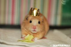 hamster with crown