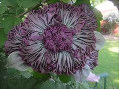 Grandma' s Flower Garden - Millinery Ribbon Flowers